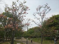 2012年の花水木3