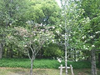 2012年の花水木