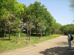 2012年の花水木4
