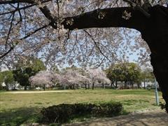 今林公園2