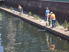 魚類生息状況調査