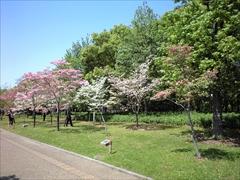 2010年の花水木3
