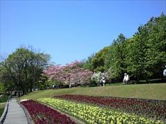 2010年の花水木4