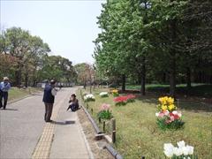 2013年の花水木4