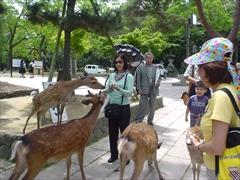 歓迎奈良旅行